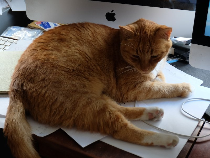 writers-with-cats